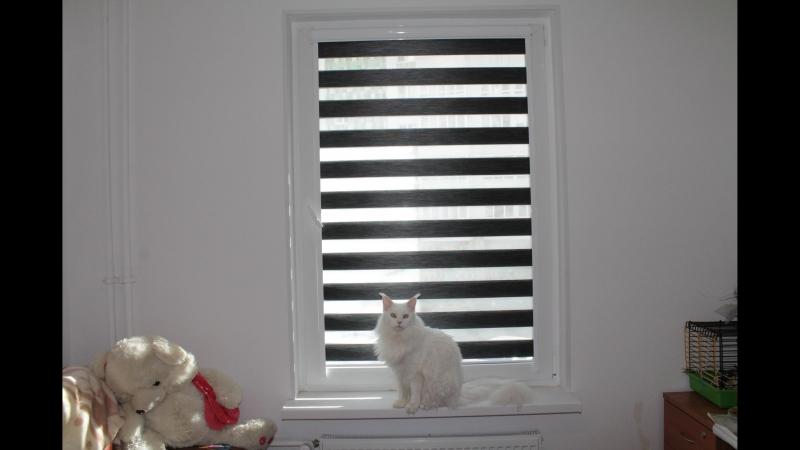 Рулонные шторы Зебра ткань Монтана Янино 1 смотреть онлайн без регистрации
