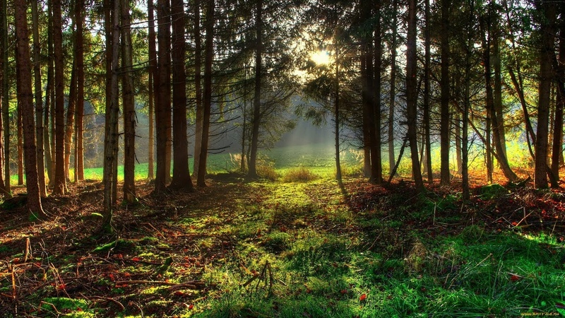 Канарейка и лес Пение кенара в живом лесу Звуки природы Пение канарейки