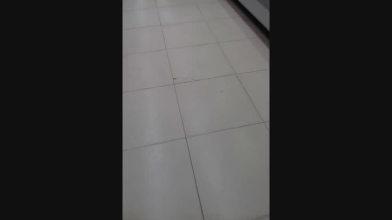 крокадил
