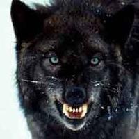 Arma Wolf, 12 апреля , Москва, id194582392