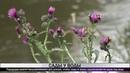 Городские власти предпринимают все усилия чтобы сады в зоне подтопления не ушли под воду