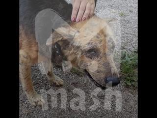 В калининградском приюте есть пес, который очень боится женщин