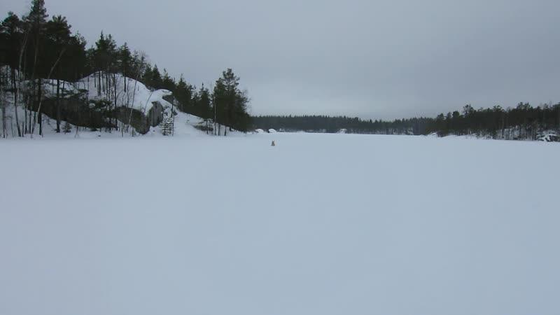 Собачьи игры на озере Травкино (Saikanlampi)