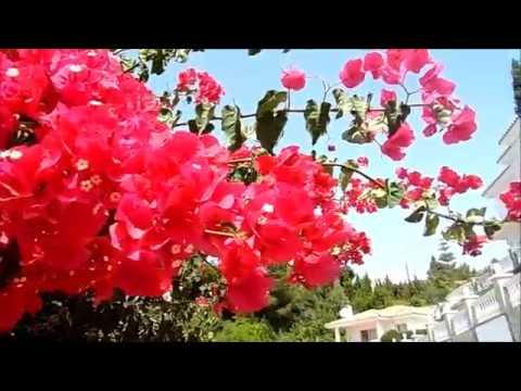 Лиана бугенвиллия, цветущий кактус, высокий эвкалипт, природа Испании, 07/07/2018