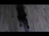 Собачка играет QwQ
