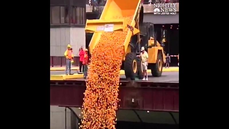 50 000 резиновых уточек спустили в реку Чикаго