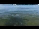 Неожиданная встреча в воде возле самого берега