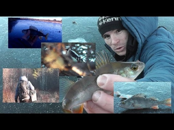 ПОМОГАЙ! ПОДСЕКАЙ! На рыбалку вместе со ЗРИТЕЛЕМ - Болен Рыбалкой №577