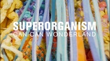 Superorganism (MicroShow for The Current)