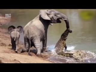 Когда животные спасают друг друга...