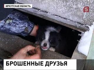 Люди переехали в город, бросив собак и кошек в поселке