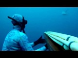 Spearfishing Wahoo with Sharks, lots of Sharks