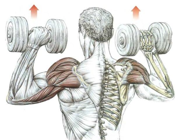 Перелом локтевого сустава (локтя) - Причины, симптомы