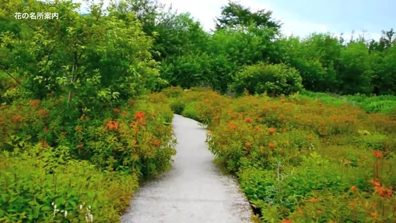 Tokachi Millennium Forest -Проект «GARDEN»