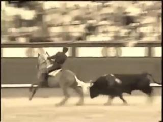 [v-s.mobi]Merlin Лошадь тореадор Живая легенда.mp4