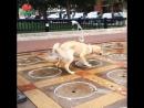 Собакен счастлив
