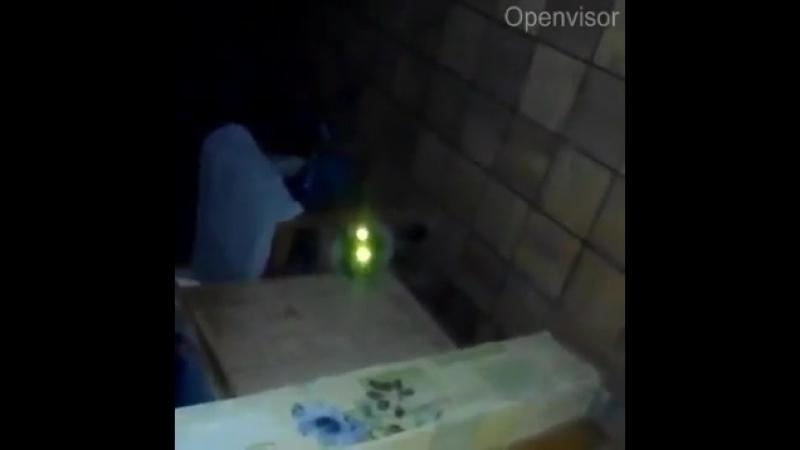 Кот Вельзевула взял на кухне в заложники неверного