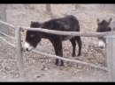 Intelligent Donkey