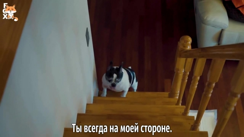 FSG FOX Colde Your Dog Loves You Feat Crush рус саб