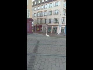 Пасхальный Страсбургский лебедь