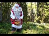 Санта Клаус ходит за грибами и ягодами и кормит своих оленей!
