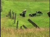 Видео к фильму «Энн из Зеленых крыш» (1985): Альтернативный финал
