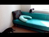 Стася и Черепашка вернулись в приют.