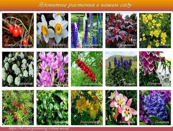 15 ядовитых растений в вашем саду