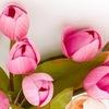 Семейный праздник «Бал тюльпанов»
