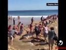 Помогли акуле