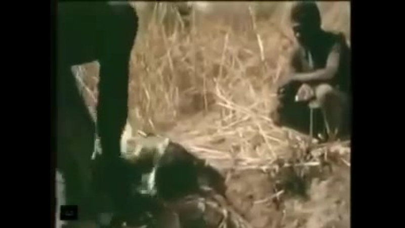 Ловля анаконды на живца