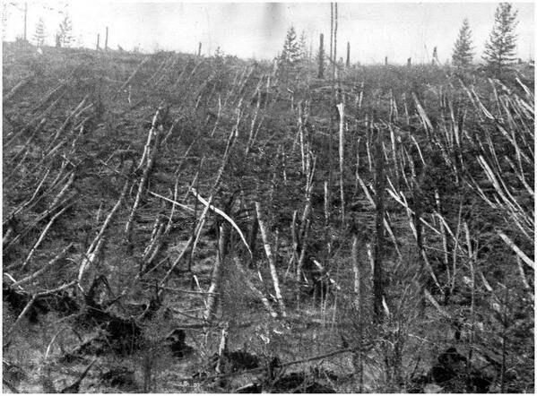 Место падения тунгусского метеорита. 1908г.