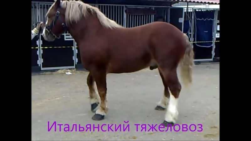 Все породы лошадей. Более 210 пород лошадей.mp4
