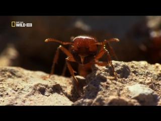 Город муравьёв