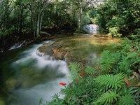 Бразильская красавица Caroline Trentini.  Красивая и разрушительная природа.  Бразильская дива - королева самбы.
