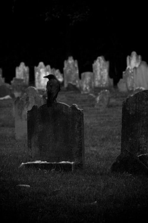 Ворон на могилі. Готична фотографія