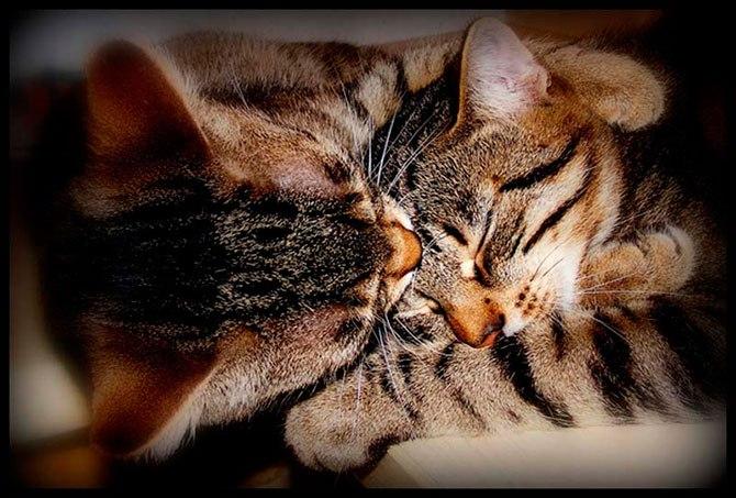 Занимательные истории о животных ,фото... - Страница 13 WFoEFrmNgX4