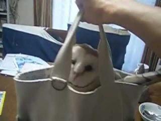 フクロウインバッグ