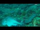 Пришельцы со дна океана (2010)