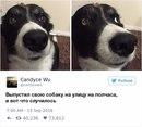 Как можно не любить собак?