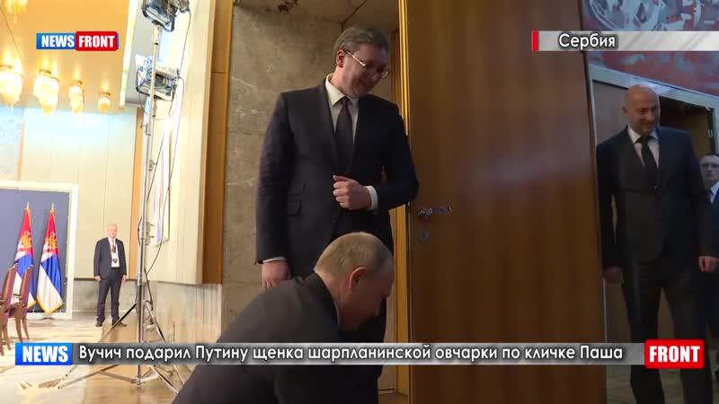 Вучич подарил Путину щенка шарпланинской овчарки по кличке Паша.