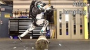 Atlas Updates - Amazing Humanoid Robot With Artificial Intelligence From Boston Dynamics.