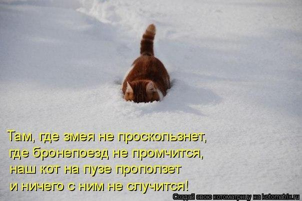 http://cs421625.userapi.com/v421625196/103e/hi-CKDizLoI.jpg