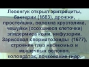 049 Оптический микроскоп целлюлоза Гук и Левенгук, Шлейден, Шванн, Вирхов