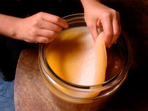 Напиток гриб в домашних условиях 161