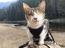 Слепая кошка, которая любит походы