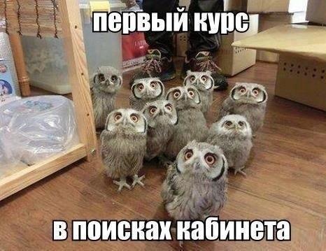 http://cs323523.vk.me/v323523506/6a15/LbUeV-iIU7Y.jpg
