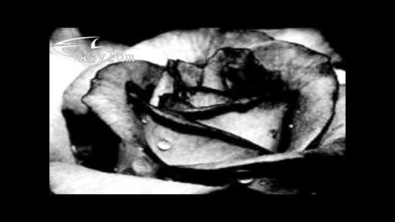 Acylum - Black Rose