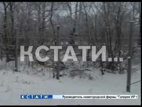Забор ставший биологическим оружием украли жулики в Большемурашкинском районе