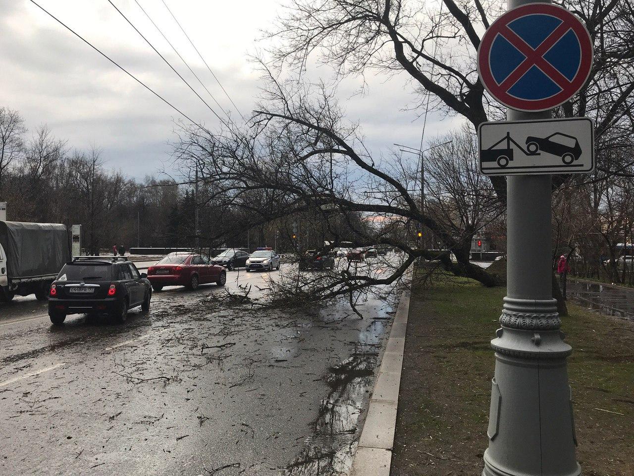 Москва встала в пробки из-за упавших на дороги деревьев: опубликованы фото с мест событий